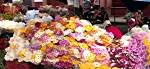 Street market for flowers leading up to the Day of the Dead