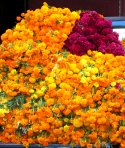 Marigolds and cockscomb for Day of the Dead