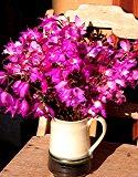 Flor de muertos wild orchids