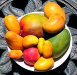 Mangos from the market